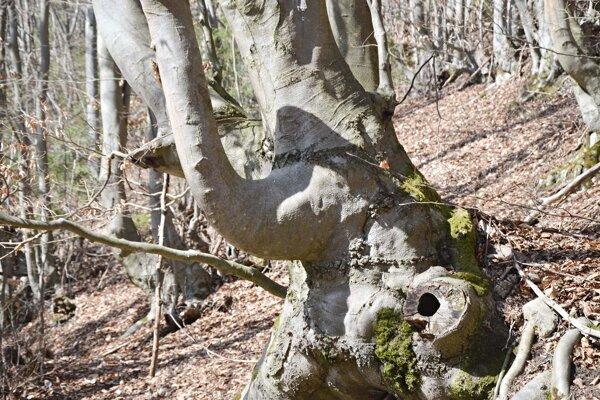 V Tiesňavách - rozprávkový les.