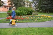 Kvetinový záhon v parku pred Mestským úradom v Turčianskych Tepliciach.