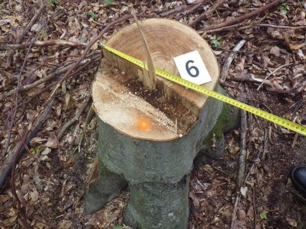 Neznámemu páchateľovi padli za obeť buk lesný, dub aj breza.