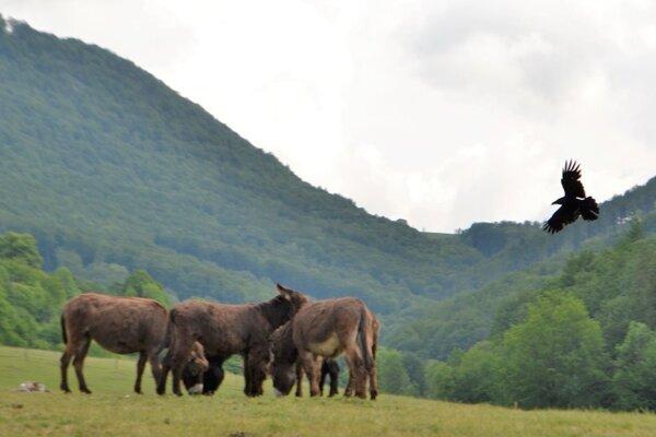 V národnom parku Muránska planina.