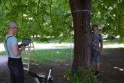 V Leviciach preverujú zdravotný stav stromov. Radnica vytypovala 150 drevín.