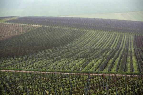 Vinice vo francúzskom regióne Champagne.