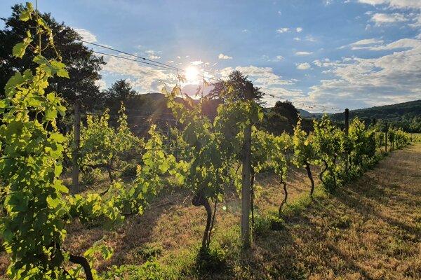 Komunitný vinohrad Široké