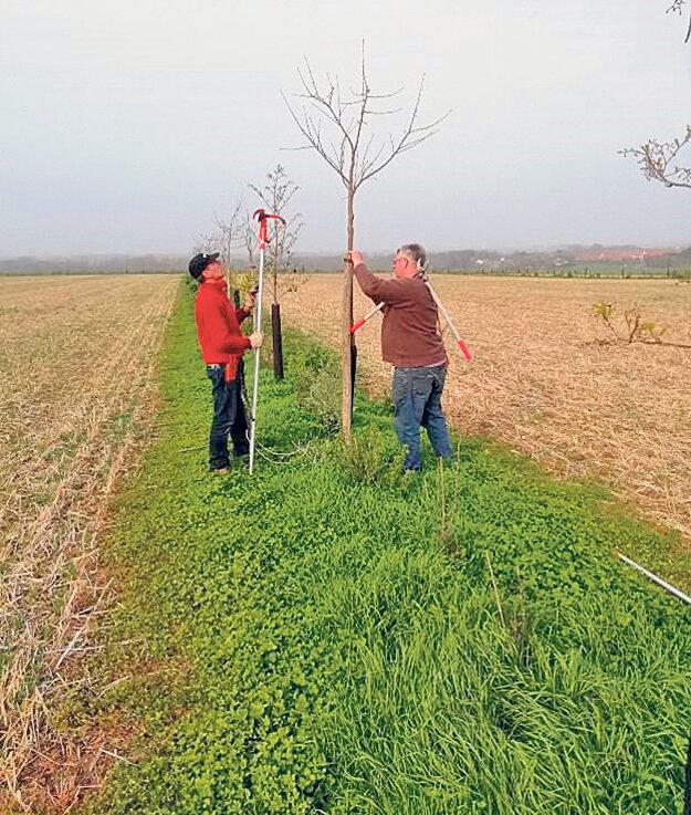 Marc Lefebvre zakladá stromové línie na ornej pôde. Druhy v líniách boli vybrané za účelom produkcie dreva.
