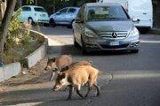 Diviaky na ulici v Ríme.