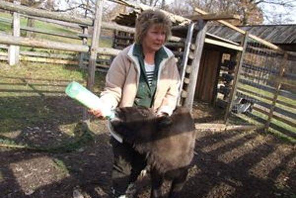 Zdenka Marková kŕmi stokilového štvormesačného zubra. Sitka ťahá mlieko cez cumlík.