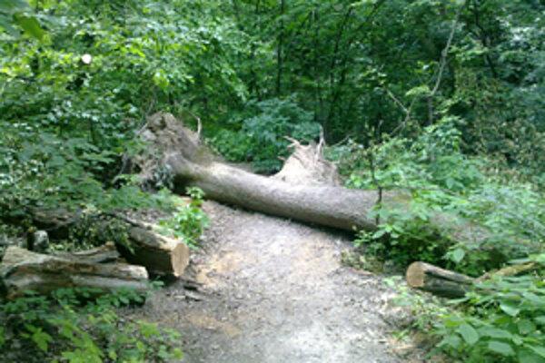 Spadnuté stromy. Spílili len časť, zvyšok dreva sa nikto nenamáhal odviezť.