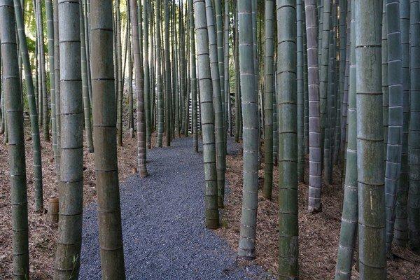 Záhrada v chráme Enkoji, miesto: Kjóto, obdobie: Edo (1603 - 1868), štýl: suchá záhrada a prechádzková záhrada s jazerom, bambusový lesík.