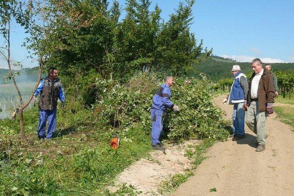 Vo vinohradoch brigádovali dobrovoľníci aj v máji.