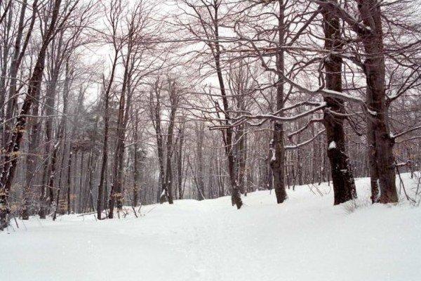 V lese je do 20 centimetrov snehu.