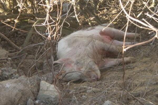 Majiteľ zvieraťa nie je zatiaľ známy, svojím konaním mestu spôsobil škodu.