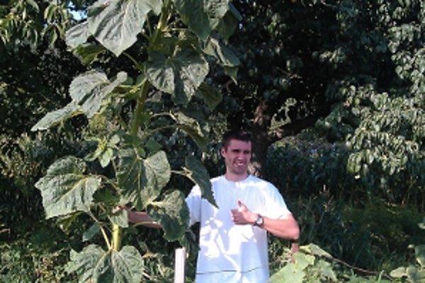 Maroš, ktorý meria takmer 190 centimetrov, siaha slnečnici do polovice výšky.
