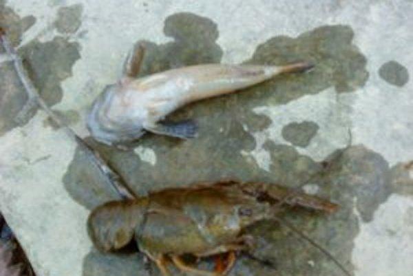 Úhyn živočíchov v potoku spôsobilo znečistenie vody.