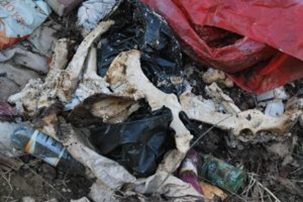 V čiernej skládke sa objavili aj desiatky blistrov z liekov a rozpadajúce sa zvieracie kosti začínajú zapáchať.