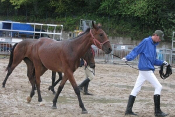 Ťažký terén potrápil kone aj ich majiteľov.
