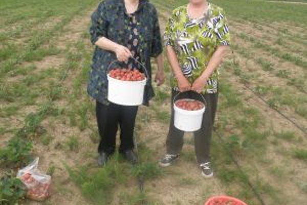 Švagriné Júlia a Mária ako správne gazdinky prišli nazbierať jahody na džem a zaváranie.