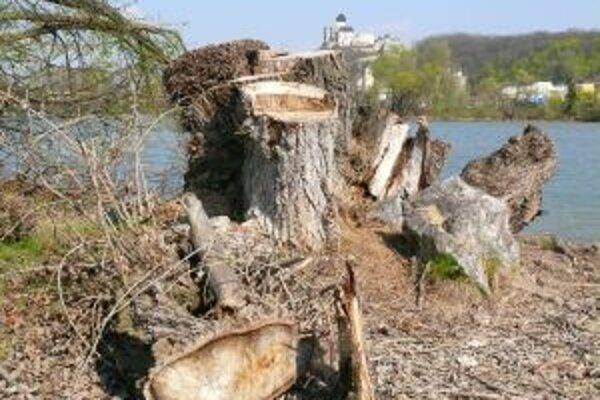 Mesto povolilo vyrúbať v zime viac ako tristo stromov a kríkov