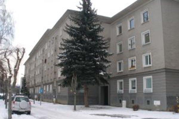 Stromy sú často predmetom susedských sporov