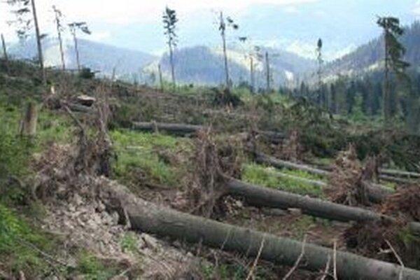 Len silný vietor, ktorý postihol v máji Bystrickú dolinu, okrajovo Veľký Polom a Olešnú, zapríčinil 33-tisíc kubíkov kalamitného dreva.