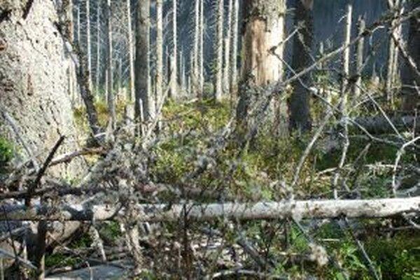 Oproti vlaňajšku sa v dôsledku teplého leta zvýšila biologická aktivita podkôrnych škodcov, najmä lykožrúta smrekového a lykožrúta lesklého.