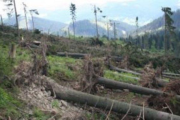 Kysucké lesy sú zničené. Na ich ozdravenie bude treba vynaložiť poriadnu námahu.