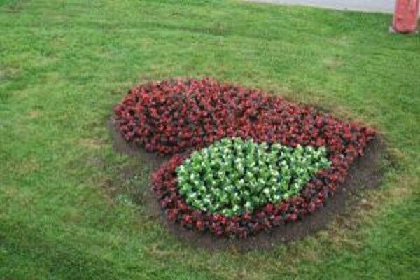 Pred Mestským úradom v Čadci vysadili kvetinové srdce.
