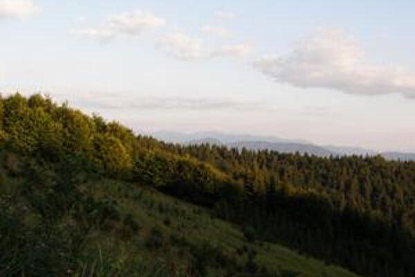 Lesy na Kysuciach bojujú s kalamitou