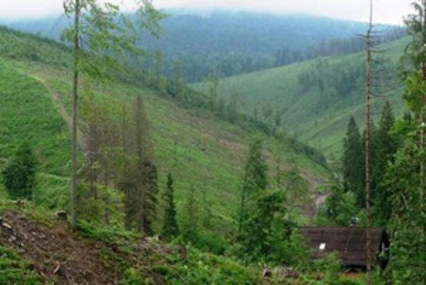 Kysucké lesy sú zničené, na niektorých miestach zostávajú holiny.