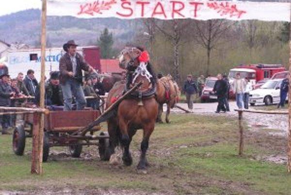 Furmani so svojimi koňmi predvedú svoje majstrovstvo.