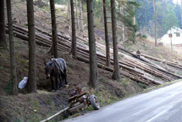 V súčasnosti je viac odberateľov, ktorí majú záujem o menej kvalitné drevo.