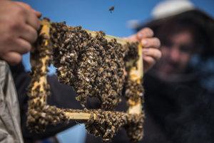 Včely milujú kofeín, potom ale poriadne nepracujú.