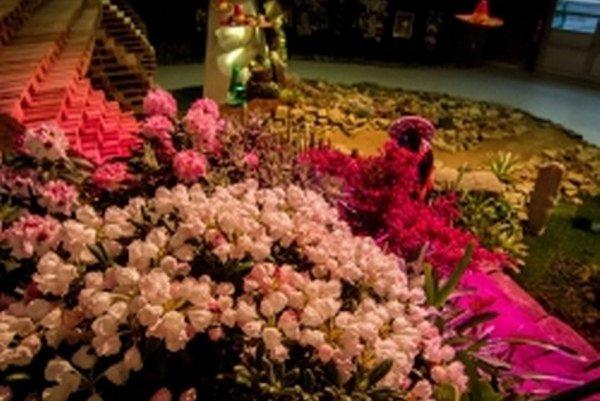 Rozkvitnutá Flora Olomouc čaká na návštevníkov.