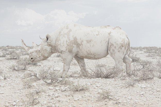 Namíbia je jedna z najmenej obývaných afrických krajín s množstvom prírodných rezervácií so vzácnymi zvieracími druhmi.
