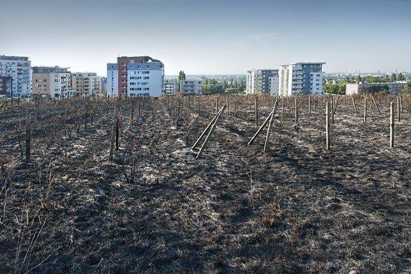 Následky rozsiahleho požiaru, ktorý vypukol vo vinohrade v oblasti Kadnárovej ulice.