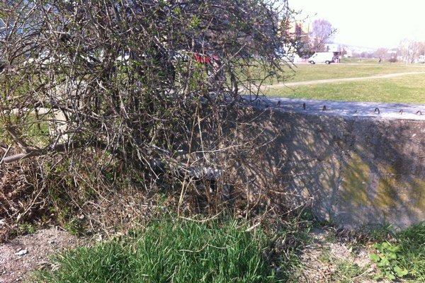 Schovaná a zarastená, tak vyzerala protitanková stena z druhej svetovej.
