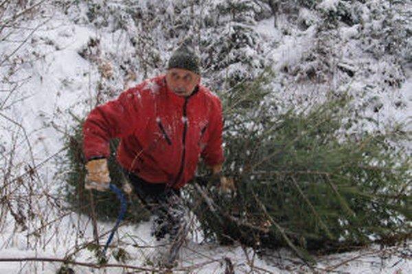 Tento rok zapadli lesníci pri hľadaní stromčekov do snehu po kolená.