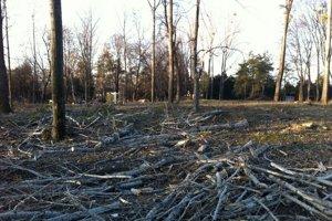 Padli vetvy a tenké stromy.