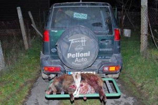 Nelegálne ulovený diviak. Zastrelil ho dlhoročný poľovník a zamestnanec štátnych lesov.