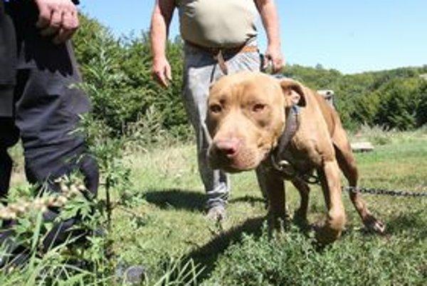Vo Viedni najviac útočili staffordširské teriéry. Na Slovensku v lete pes z tejto svorky zabíjal.