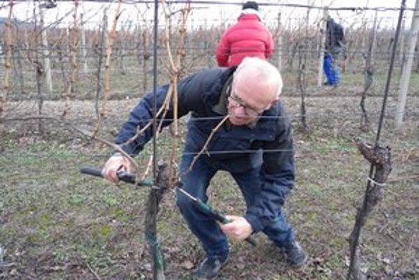 Takmer tridsať vinohradníkov súťažilo v reze viniča.