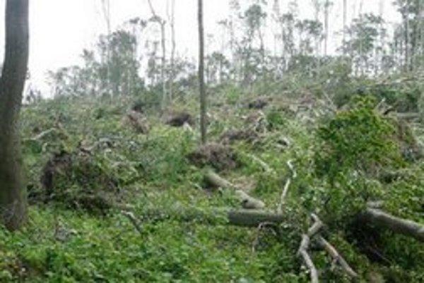 V roku 2010 postihla mestké lesy kalamita.