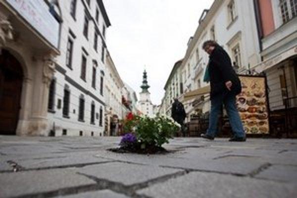 Aktivisti vysadili do poškodenej dlažby v pešej zóne kvety.