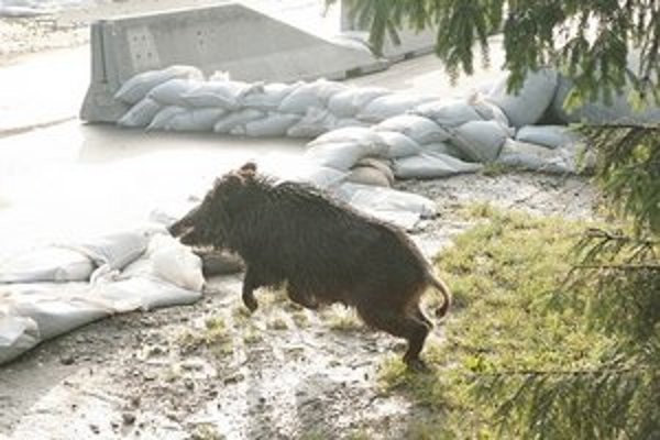 Niektoré zvieratá povodeň prežili, množstvo ich však zahynulo.