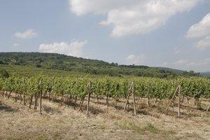Vo vinohradoch nad Novým Mestom sa možno bude stavať.