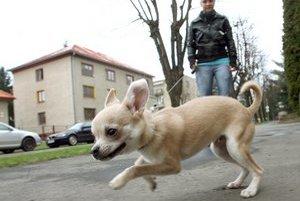 Mestské časti väčšinou vybrané dane za psa smerujú na budovane a servisovanie košov na exkrementy.