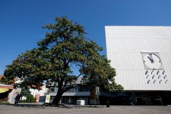Výrubové povolenie už majú aj na strom paulownia na Kamennom námestí. Chcú tam budovať aj podzemné garáže.