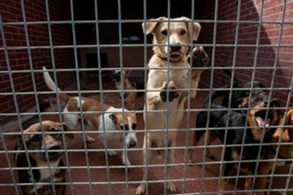 Psy končia za mrežami.