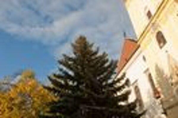 Stromček bude pripomínať blížiace sa Vianoce už od piatku.