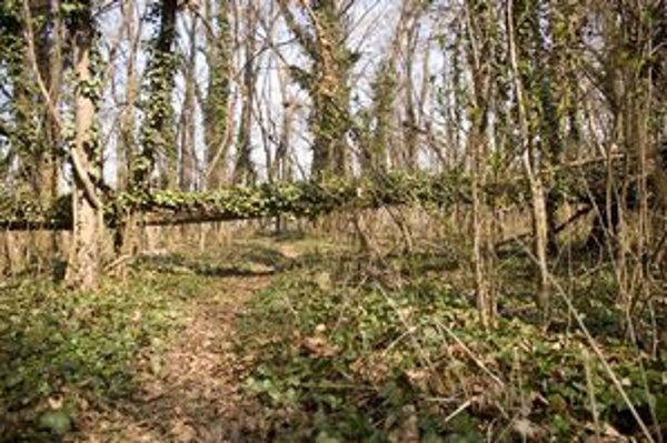 Soví les je chránený areál.