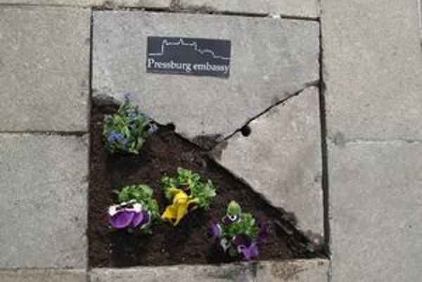 V rámci guerilla gardeningu vysádzajú mladí ľudia v uliciach mesta kvety.